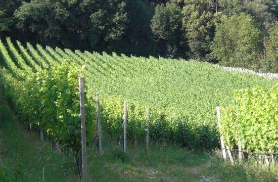 buschenschank-haidnerhof-brixen-suedtirol (27)